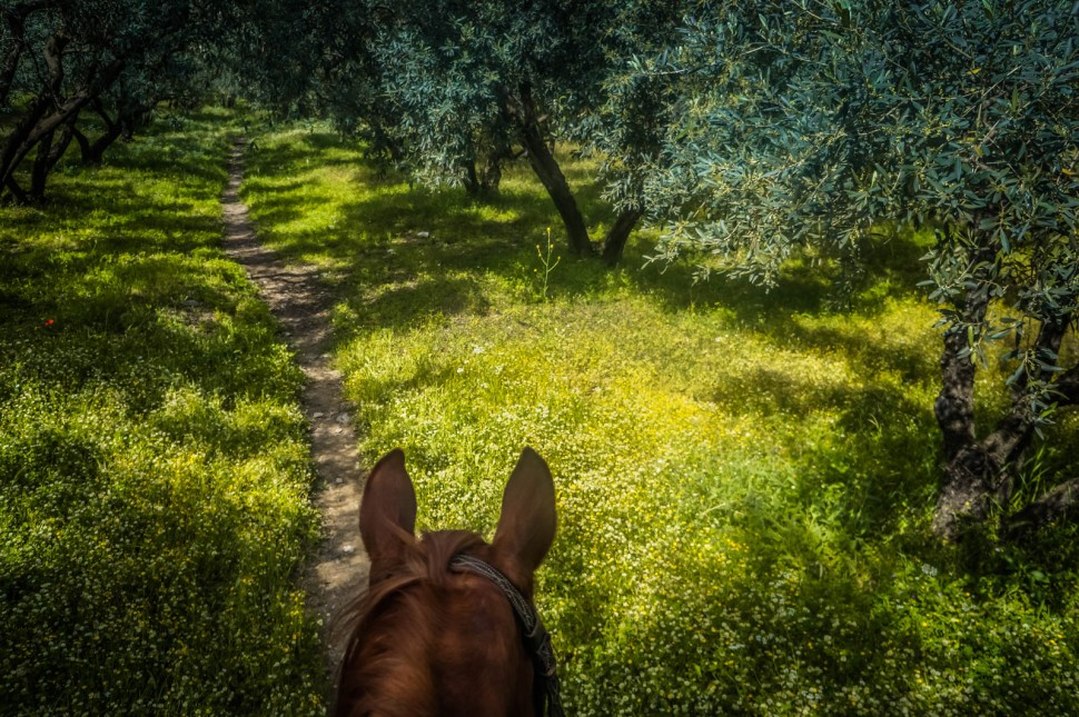 horseback-riding-pelion-greece-la-vie-en-blog-all-rights-reserved-6
