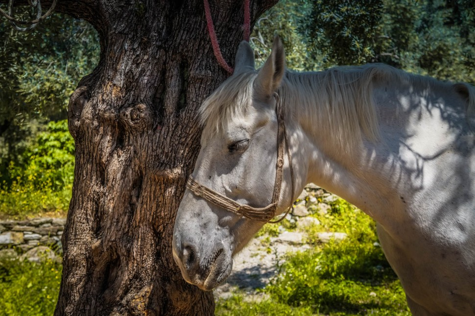horseback-riding-pelion-greece-la-vie-en-blog-all-rights-reserved